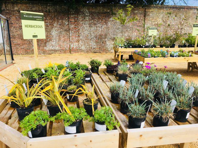 Walled Garden Moreton herbaceous